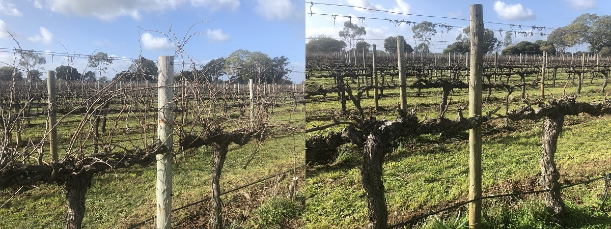 Before and after pruning