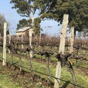 Highbank Vines